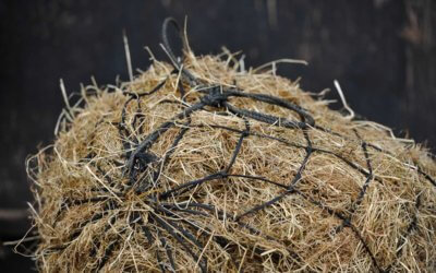 Hay needed for Tia Horses