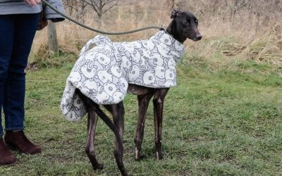 Gemma appeal at Tia, neglected Greyhound needs your help