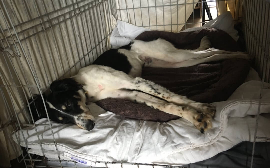 Tia rescue homes another happy hound