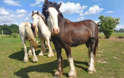 Pony Rehoming Day at Tia Rescue