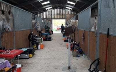 Equine dentist does a clinic here at Tia…