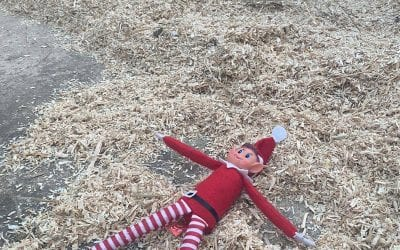 Elf on the shelf! Day 13…