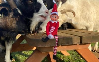 Elf on the shelf! Day 16…
