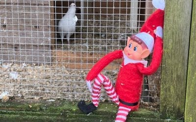 Elf on the shelf! Day 18…