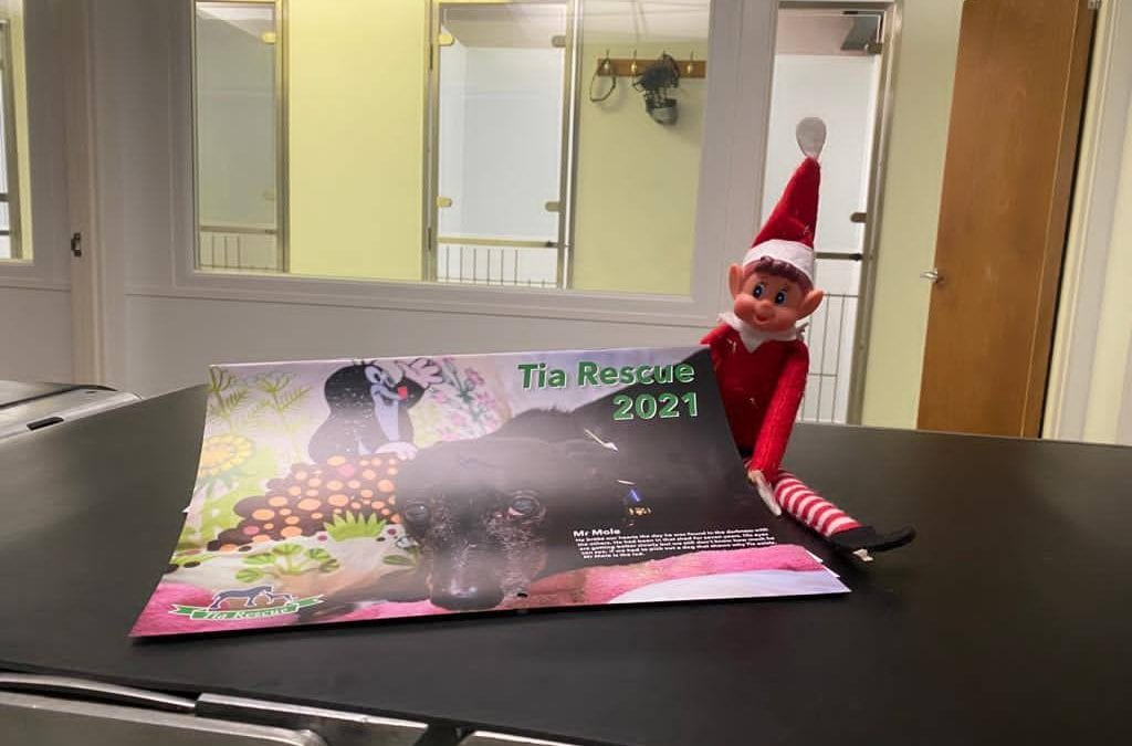 Elf on the shelf! Day 3…